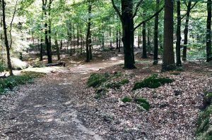 Amerongse Berg Trail - Trailrunning events