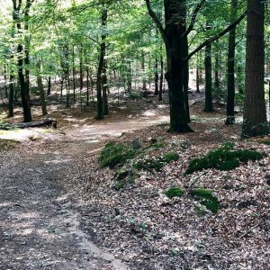 Amerongse Berg Trail - Trailrunning events