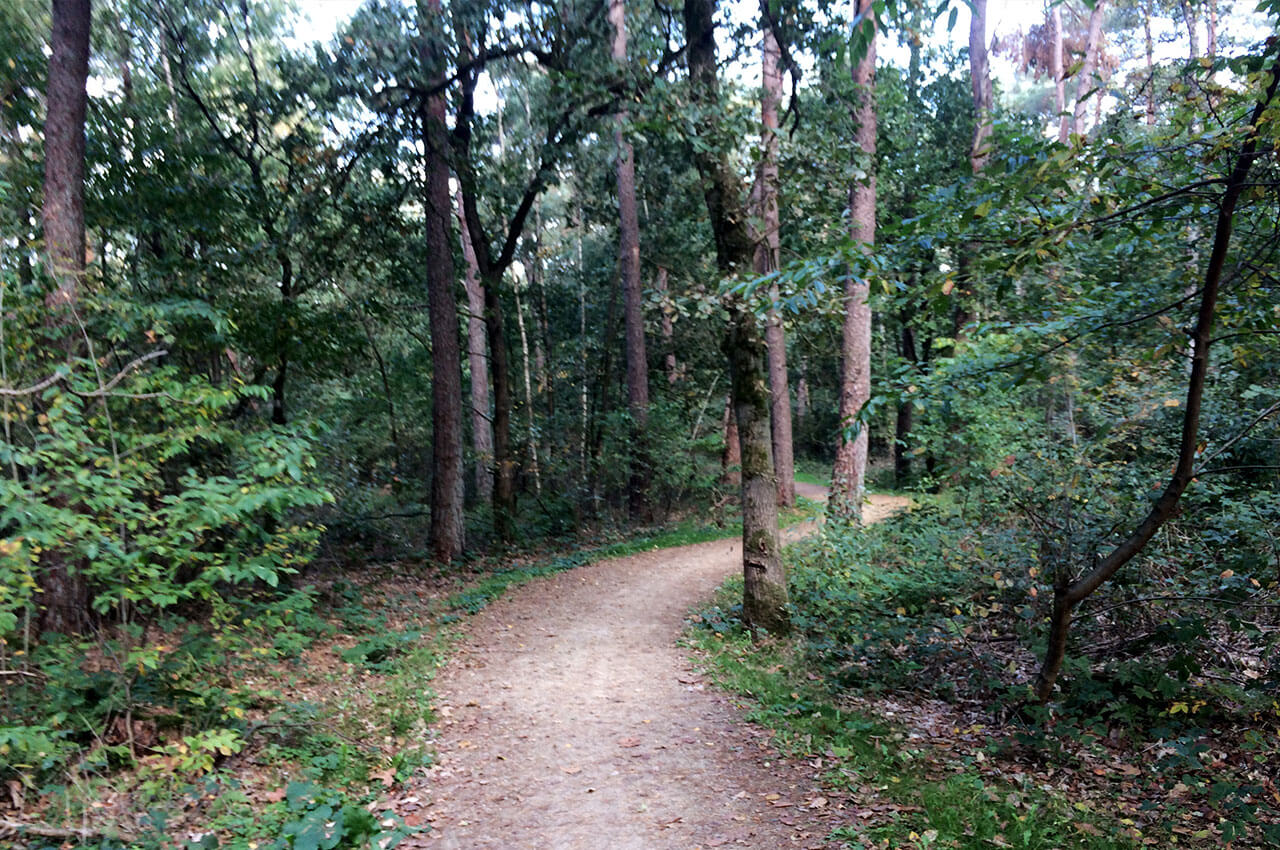 Bospad tijdens de Devil's Trail