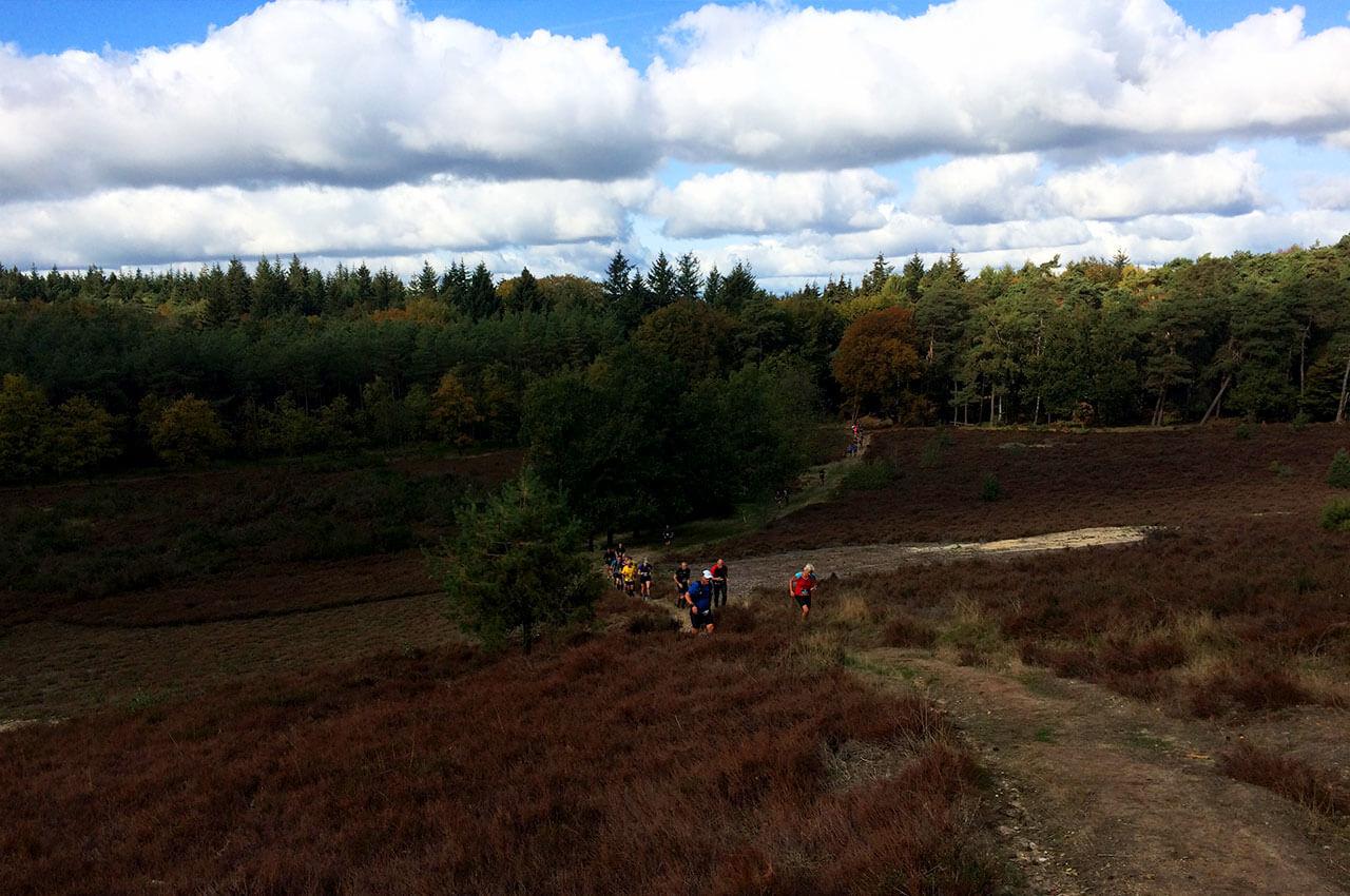 Paarse heide tijdens de Utrechste Heuvelrug trail