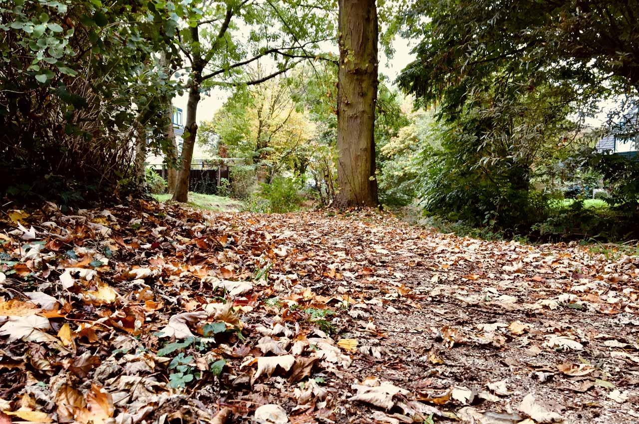 Hardlopen in de herfst over de bladeren