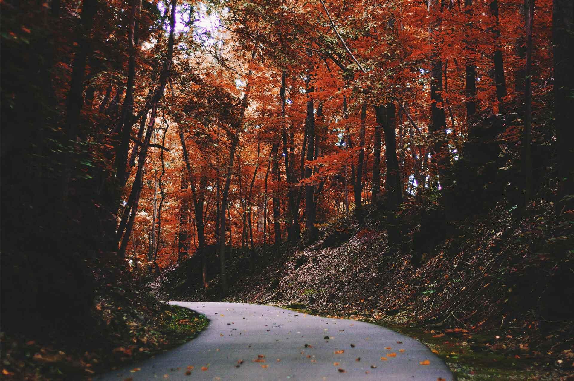 hardlopen in de herfst in de bossen met bladeren op de weg