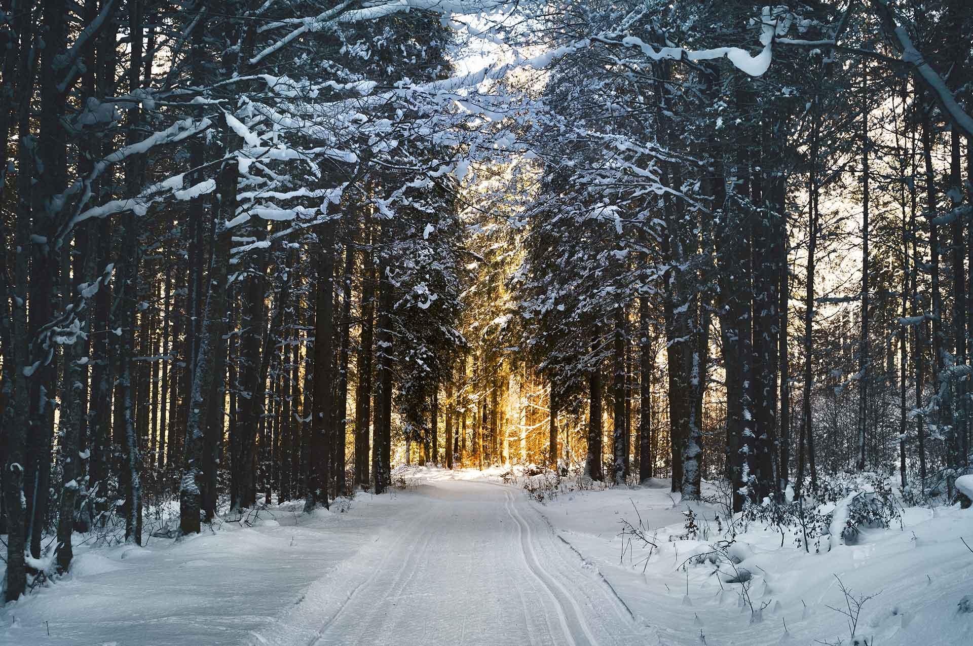 Achtergrond afbeelding van kerst