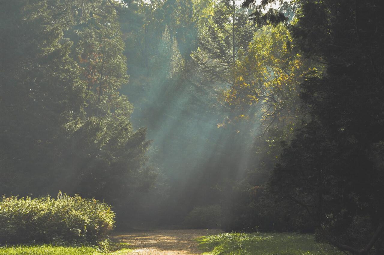 Zon schijnt door de bomen bij de Vaalserbergtrail