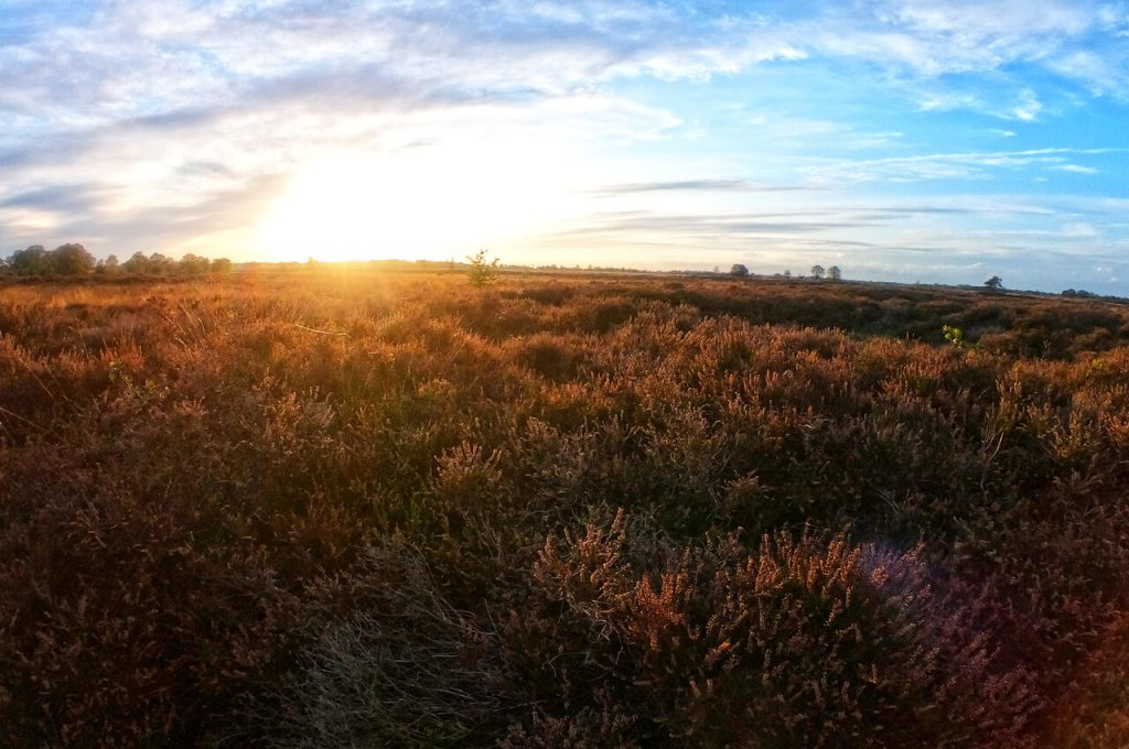 Geweldig uitzicht over de heide in Drenthe