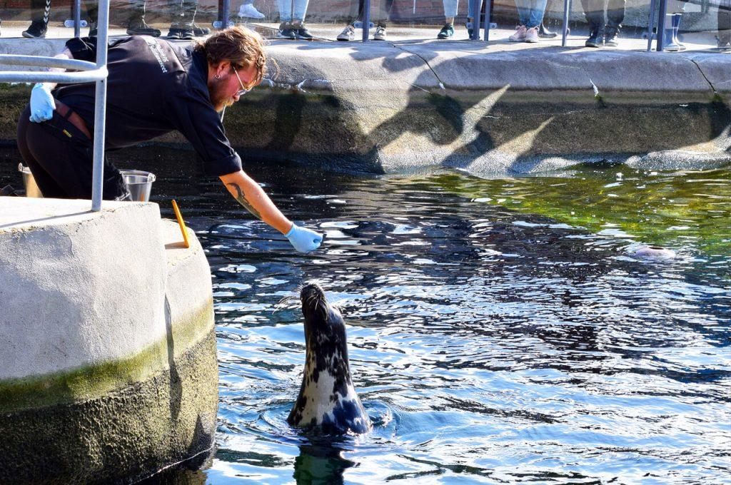 Zeehonden voeren in het maritiem museum in Esbjerg
