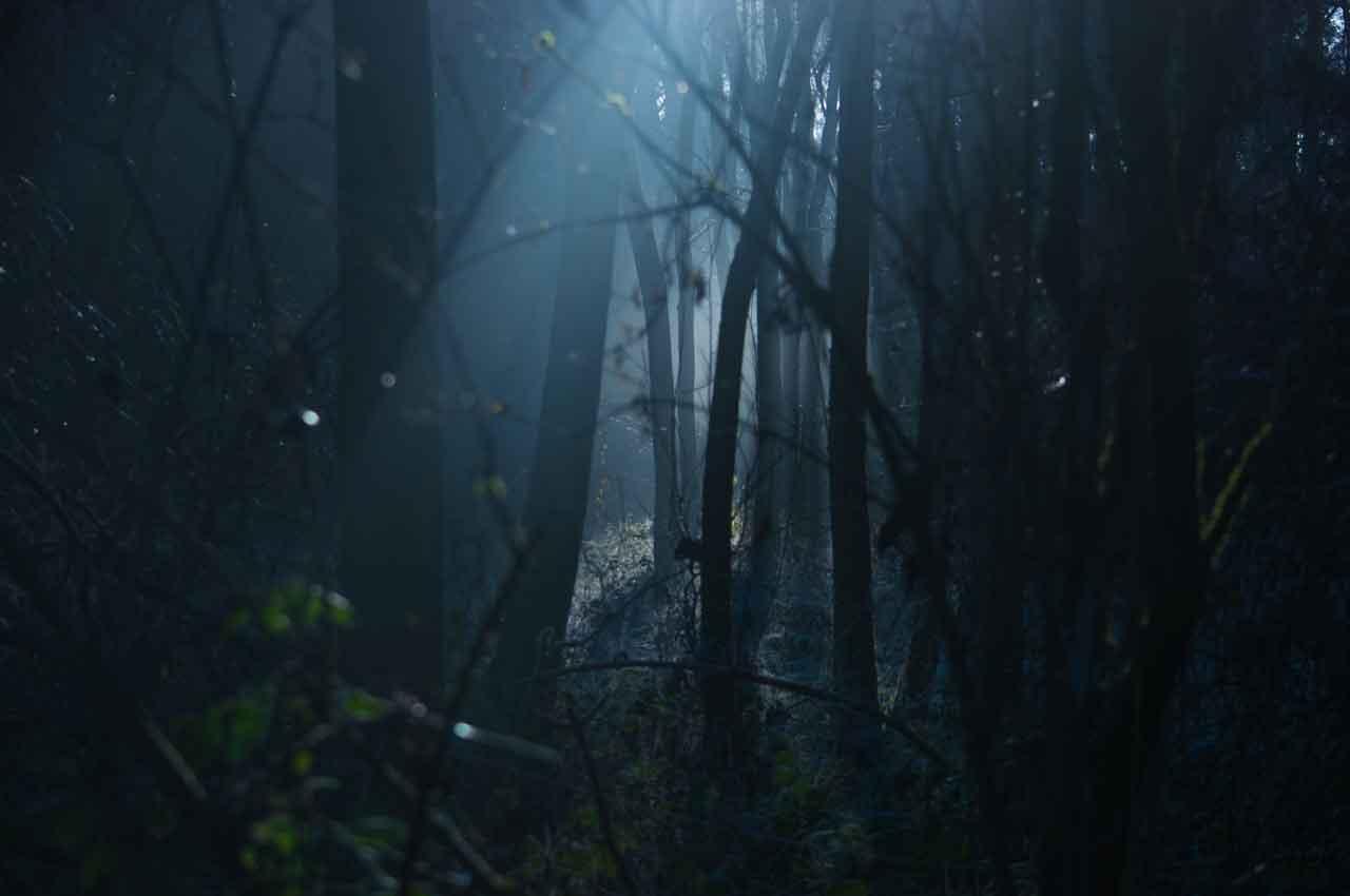 Hardlopen door de bossen in het donker: nacht trailrun