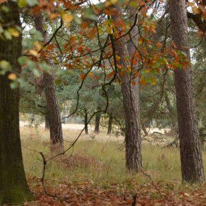 Sint Anthonis Trail - Trail kalender Nederland