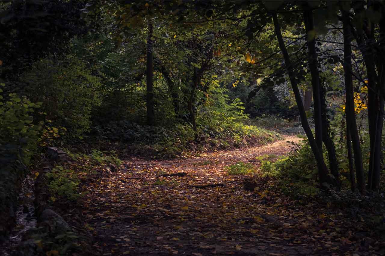 Wat is een ultramarathon: minimaal 50 kilometer hardlopen