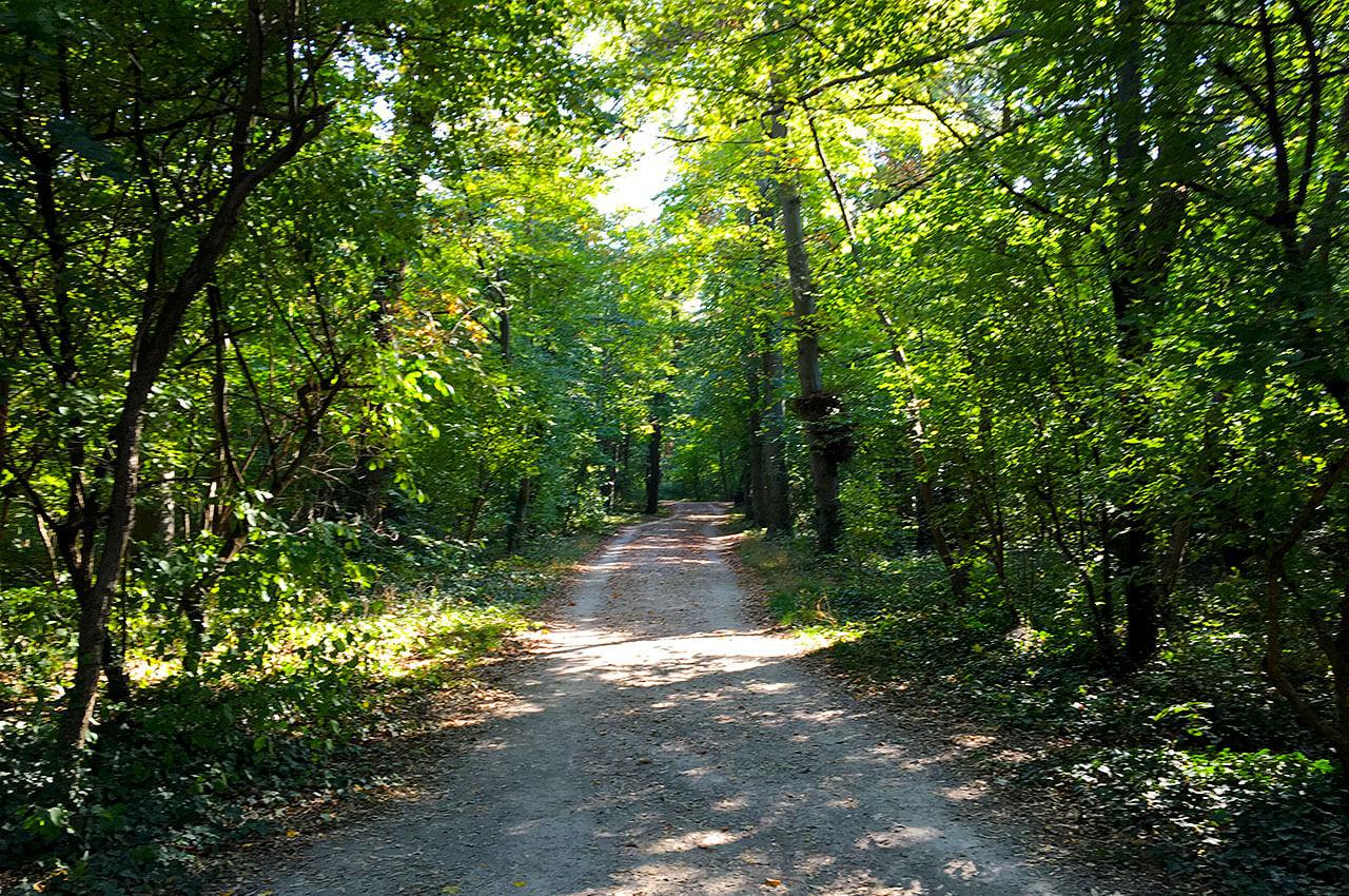 Wat is trailrunning? Lopen op onverharde wegen door het bos.