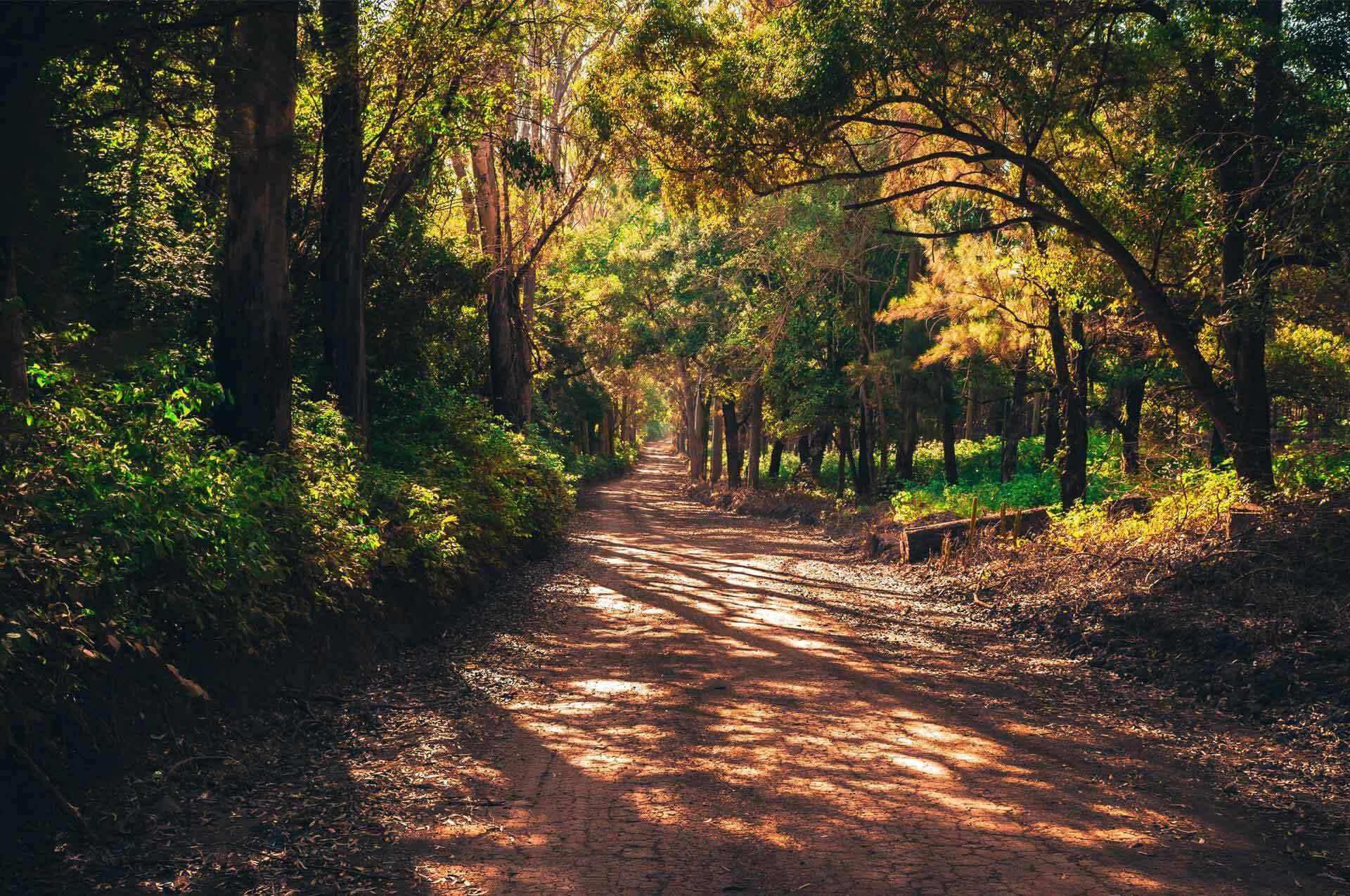 Zo word ik een trailrunner, volg al mijn trailrunning avonturen